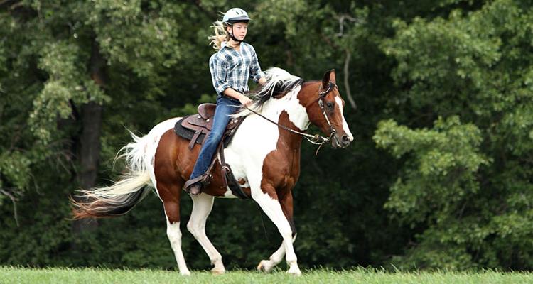 horse riding program